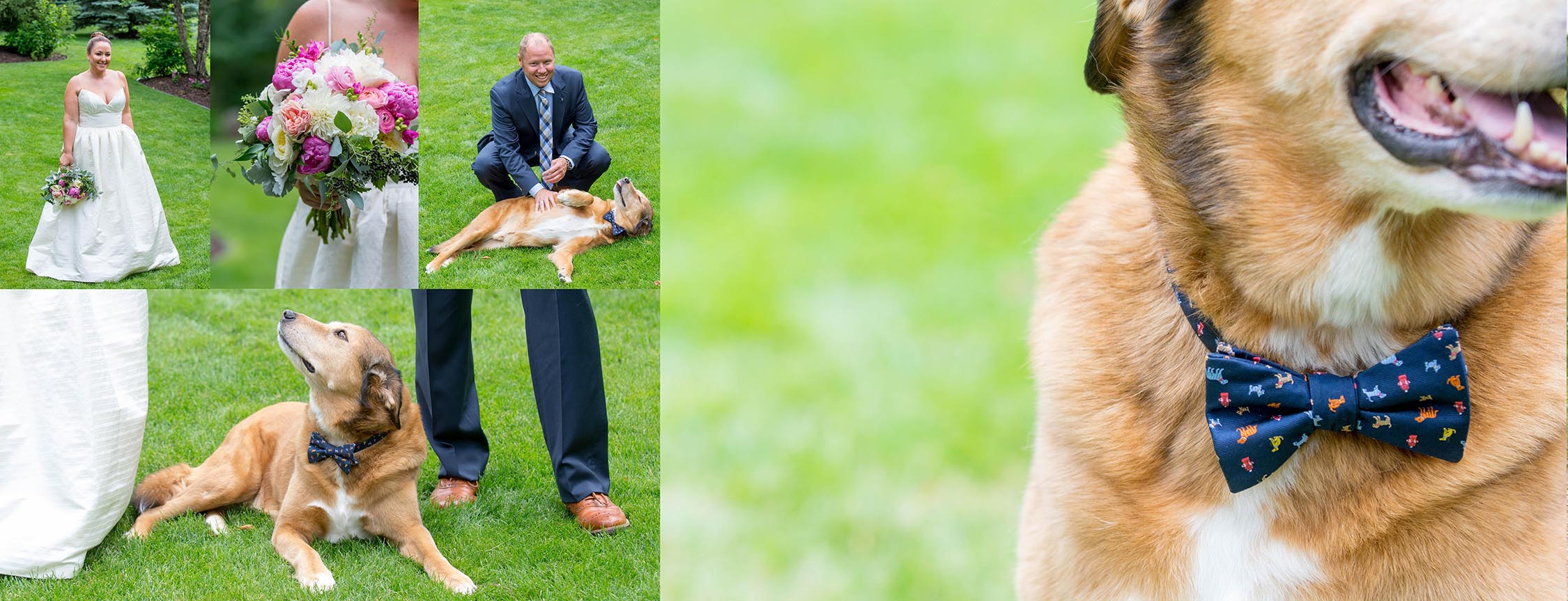 Wedding Photographers for pet lovers