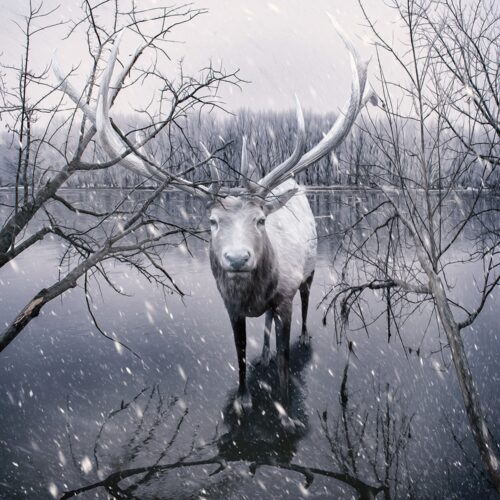 white stag small